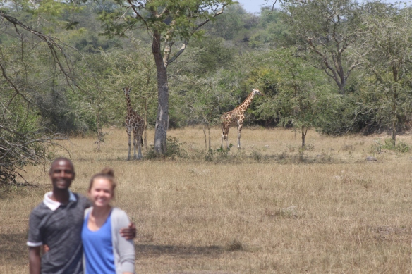 ...Other times I can only get it to focus on the giraffes, and not the people.